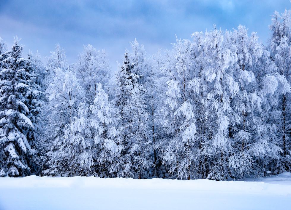 Vinterlandskap med snødekte trær i Norge