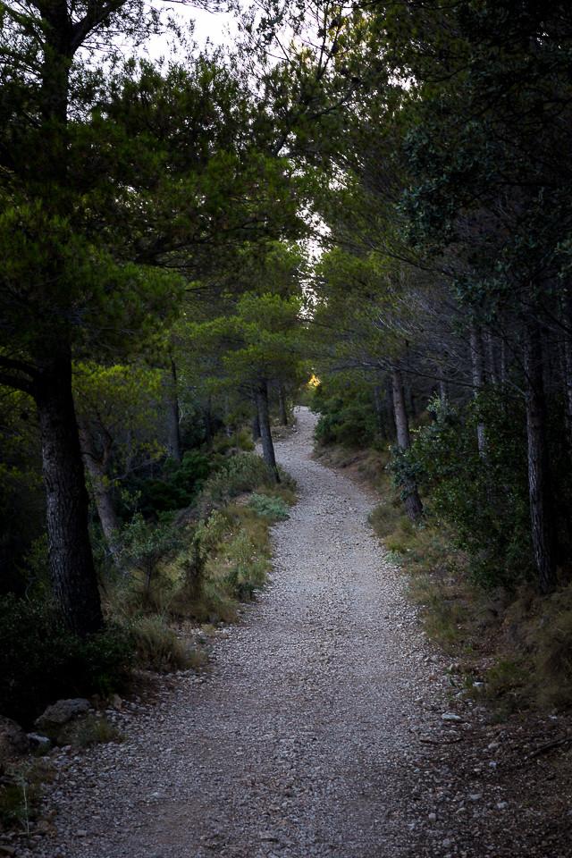Stien opp til Puig Campana