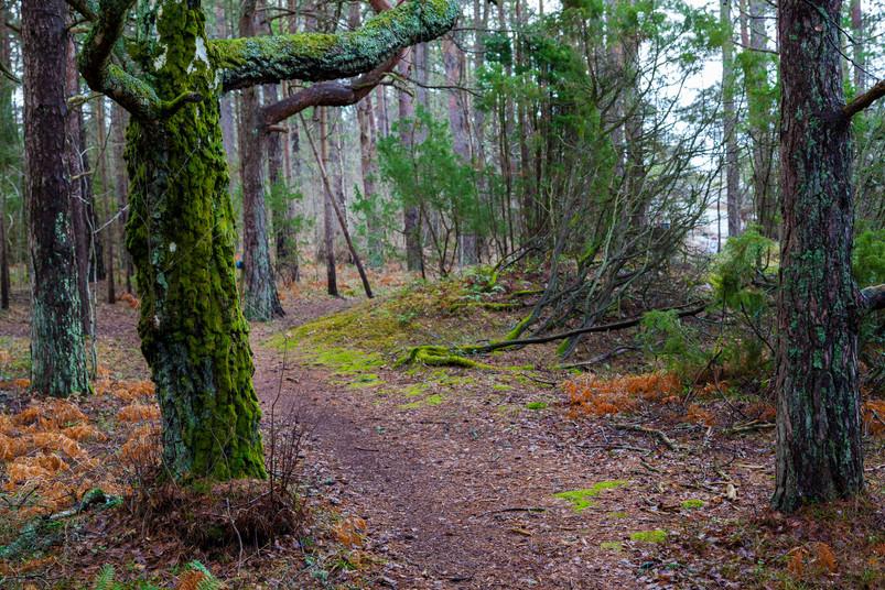 Høstfarger i mørk skog
