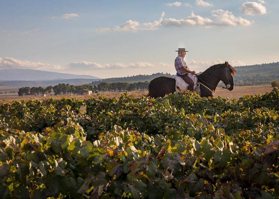 Gården har en egen avdeling for hestehold og avl