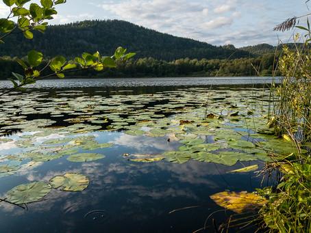 Dælivann - naturreservat, fisk og frosk