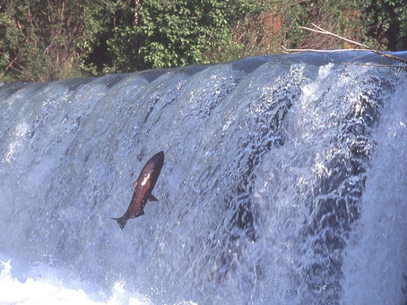 15 associations en ont assez des engins et filets de pêche dans l'Adour fluvial !