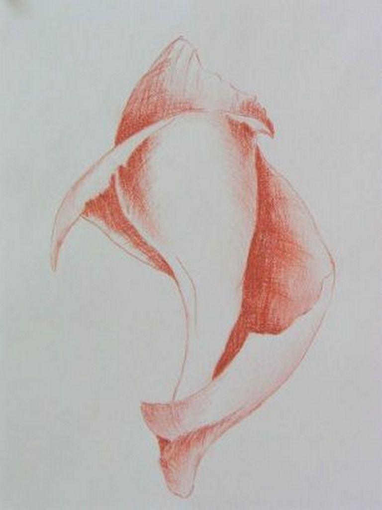 Rode schelp