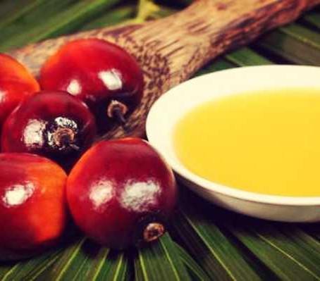 Porque não usar óleo de palma