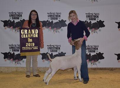Grand mkt goat.jpg