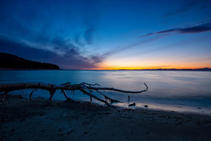 Sunset Cedar Tree On Beach...