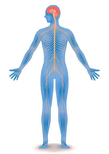central-nervous-system-QBI (1).jpg