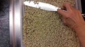Zum Trocknen auf Dörrfolie verteilen