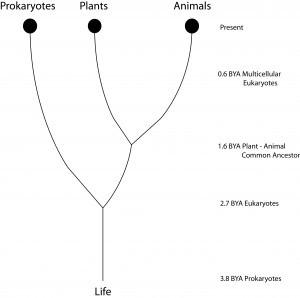 plants as animals