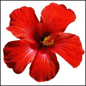 Hibiscus for mood, lowering blood pressure, and exercise performance