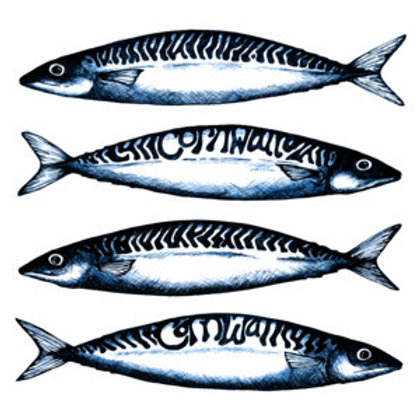 Cornish Mackerel card