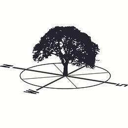 Oak tree south.jpg