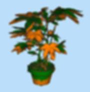 117 plant scan.JPG