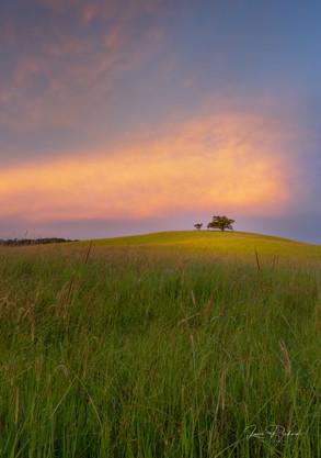 Tree Hill 2