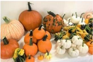 2020 Pumpkins 2.png