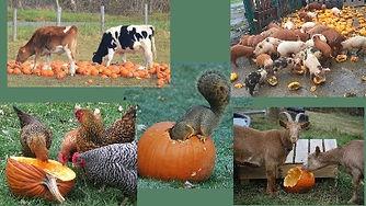 Pumpkins%20and%20animals_edited.jpg