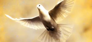 Holy Spirit, dove, Sharefaith