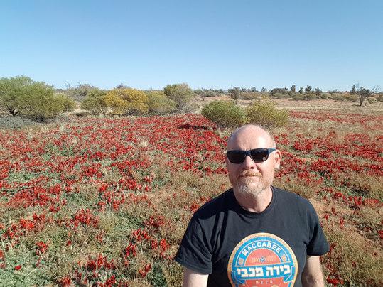 Beautiful Sturt Desert Pea