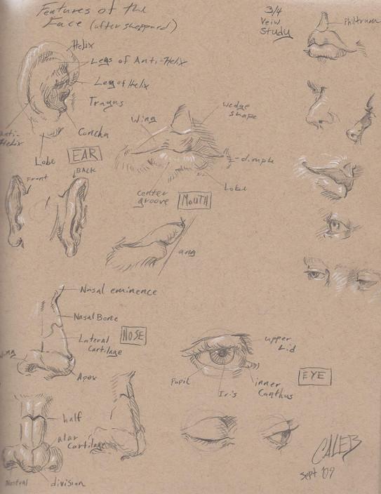 anatomy studies.jpg