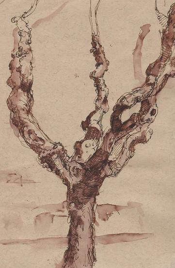 olive tree 2.jpg