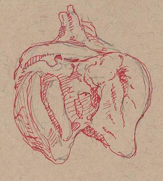 sheep heart.jpg