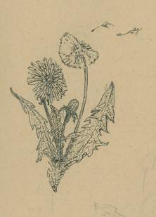 Sketch16_50.jpg
