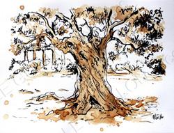 olivier en Sicile (Agrigente)