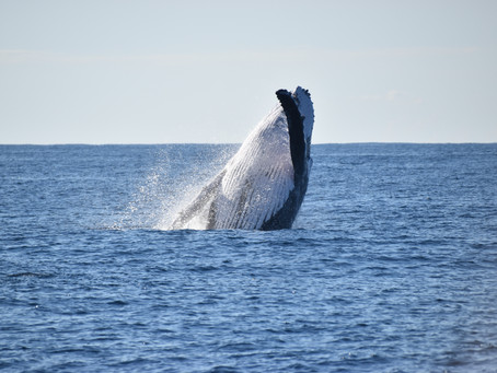 Whales galore and brilliant weather