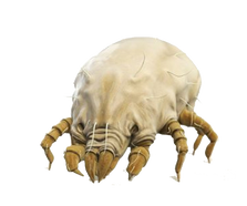 mite.png