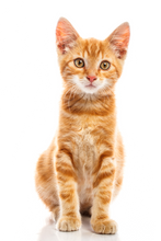 cat-png-26.png