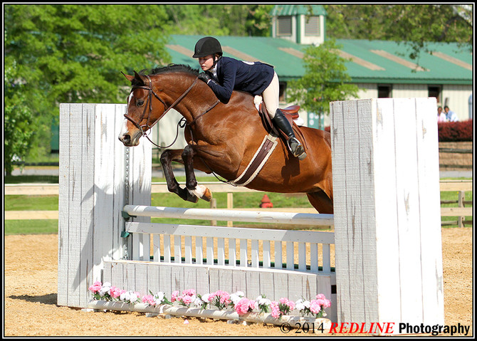 About Those Horse Shows March 2015 Edition