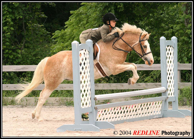 Why You Should Sign Up for Redline Horse Show Photos