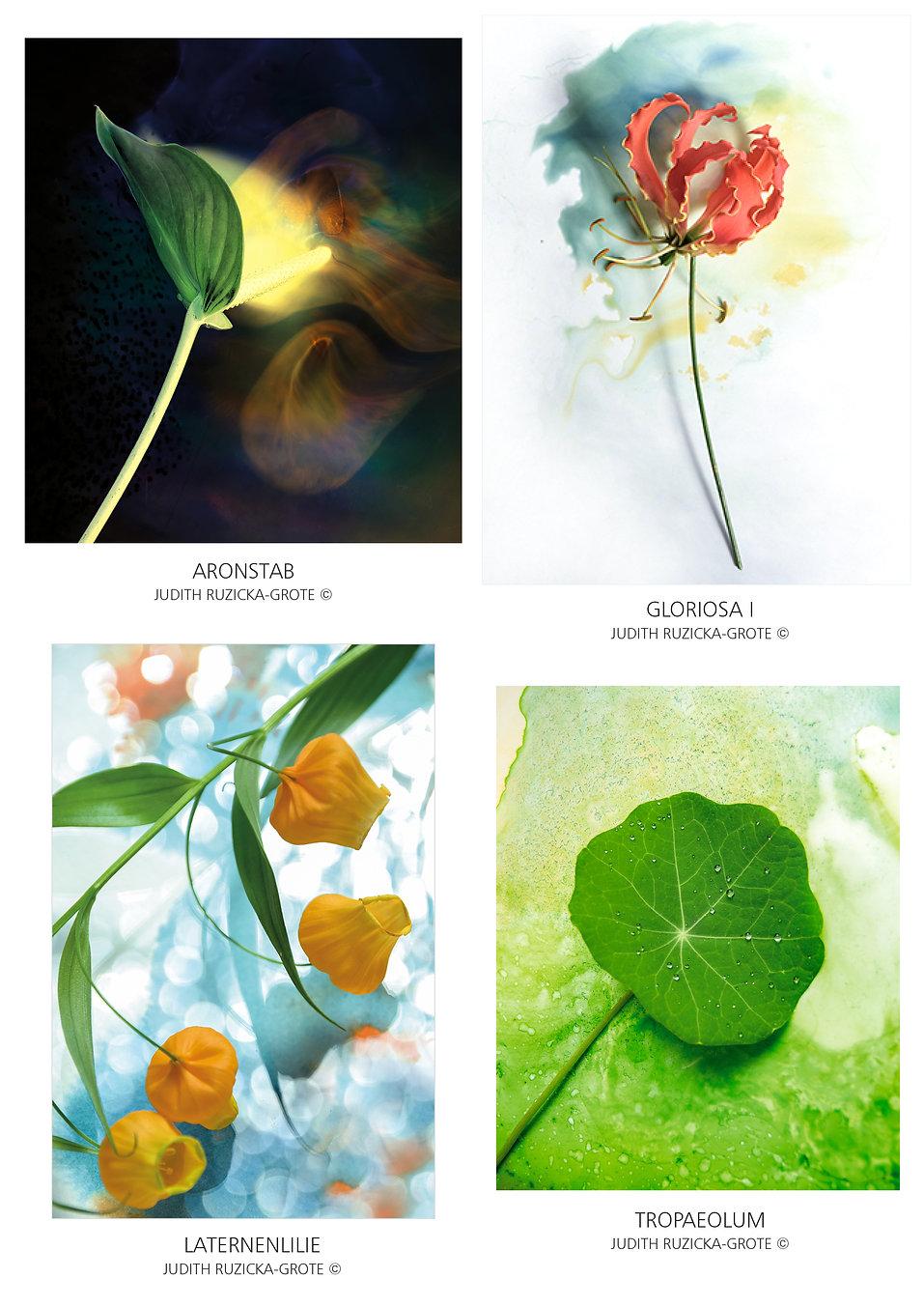 FLOWERS1_J.Ruzicka-Grote.jpg