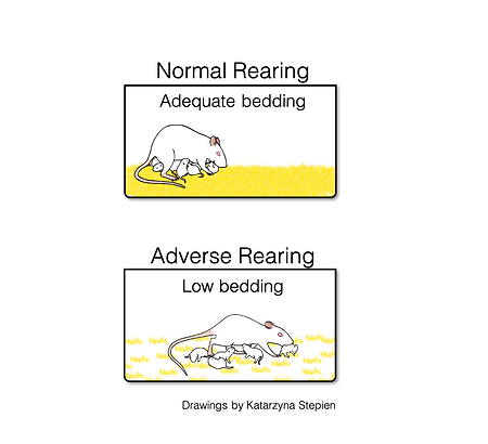 Low bedding model.png