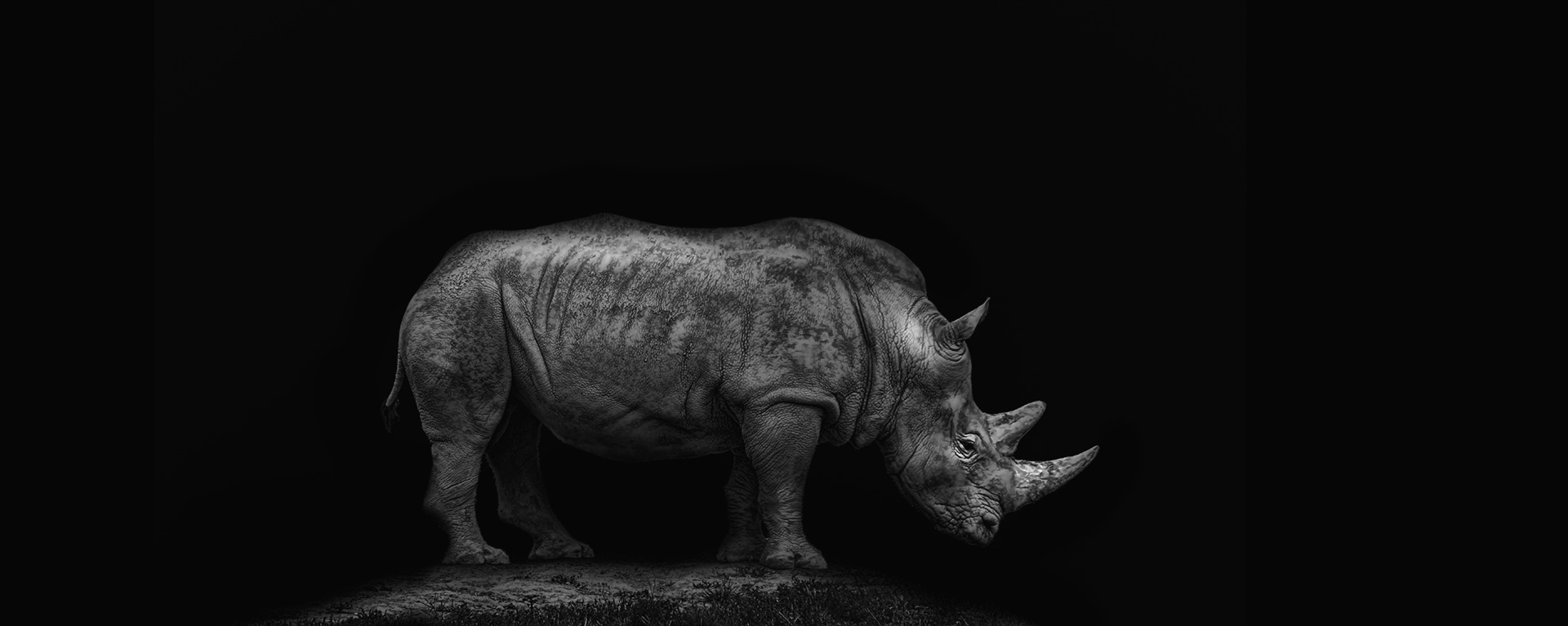 titleslide_rhino