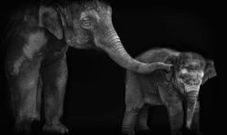 elephantmom