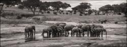 elephantgathering