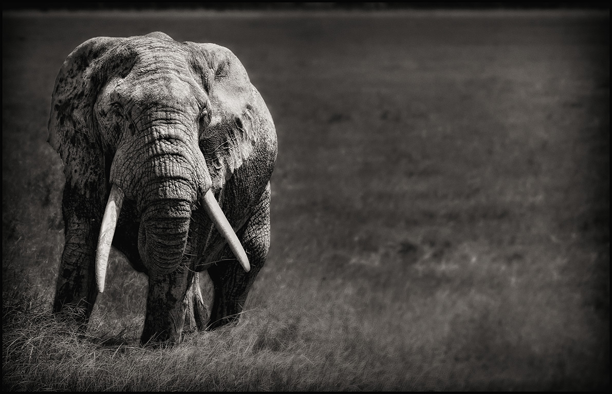 oldelephant