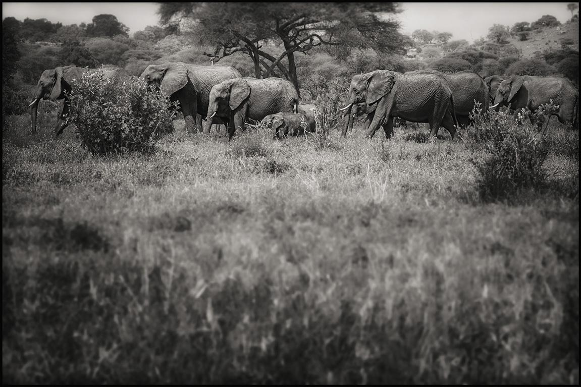 elephantblur