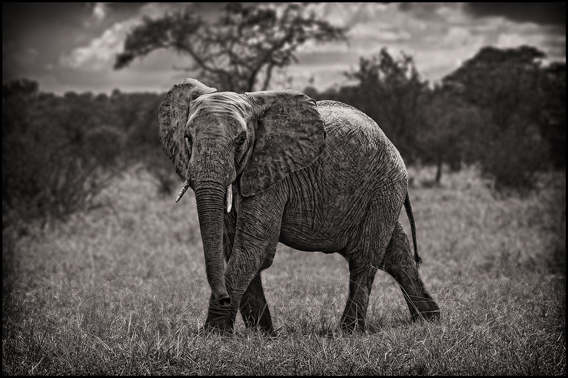 elephantbigboy