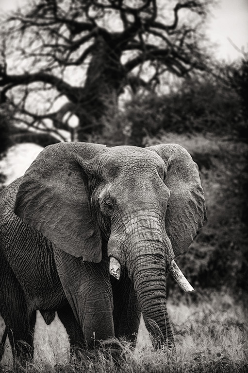elephantbroketuskbw