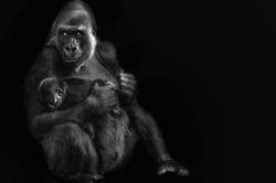 gorillamom