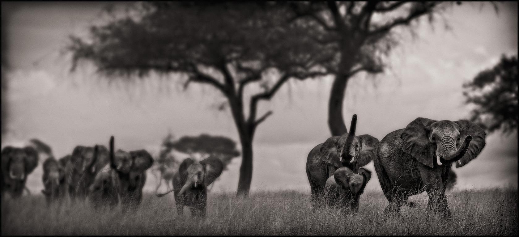 elephantwalk
