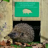 hedgehog highway badge_edited.jpg