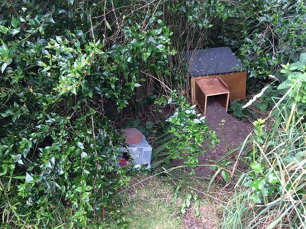 hh box inAnne's garden.jpg
