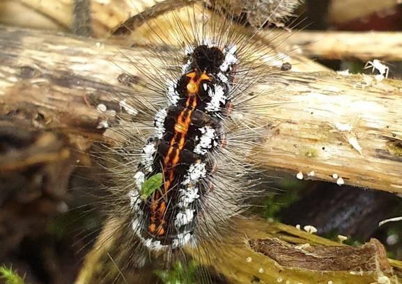 caterpillsr EH.jpg