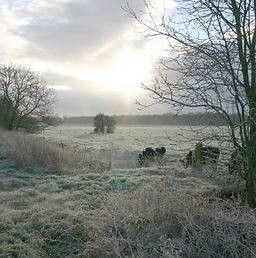cows_and_frost.jpg