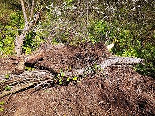 Basking area for snakes.jpg