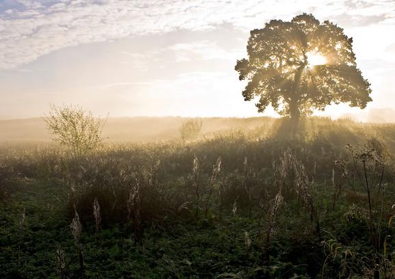 oak dawn 1.jpg
