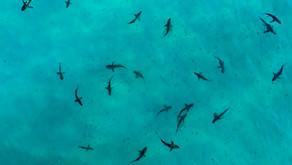 Aquicultura: O Futuro do consumo de organismos aquáticos